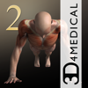 iMuscle 2 - iPhone Edition - 3D4Medical from Elsevier