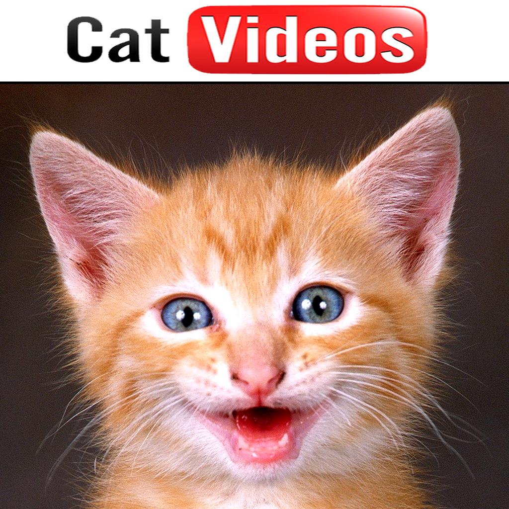 Cat Videos!!!