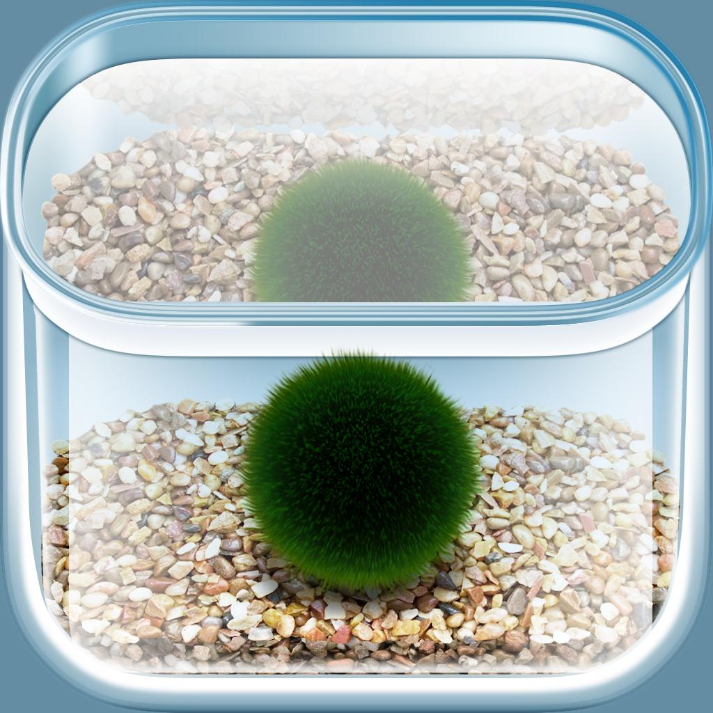 まりも - 水槽で小さなマリモを育てるアプリ