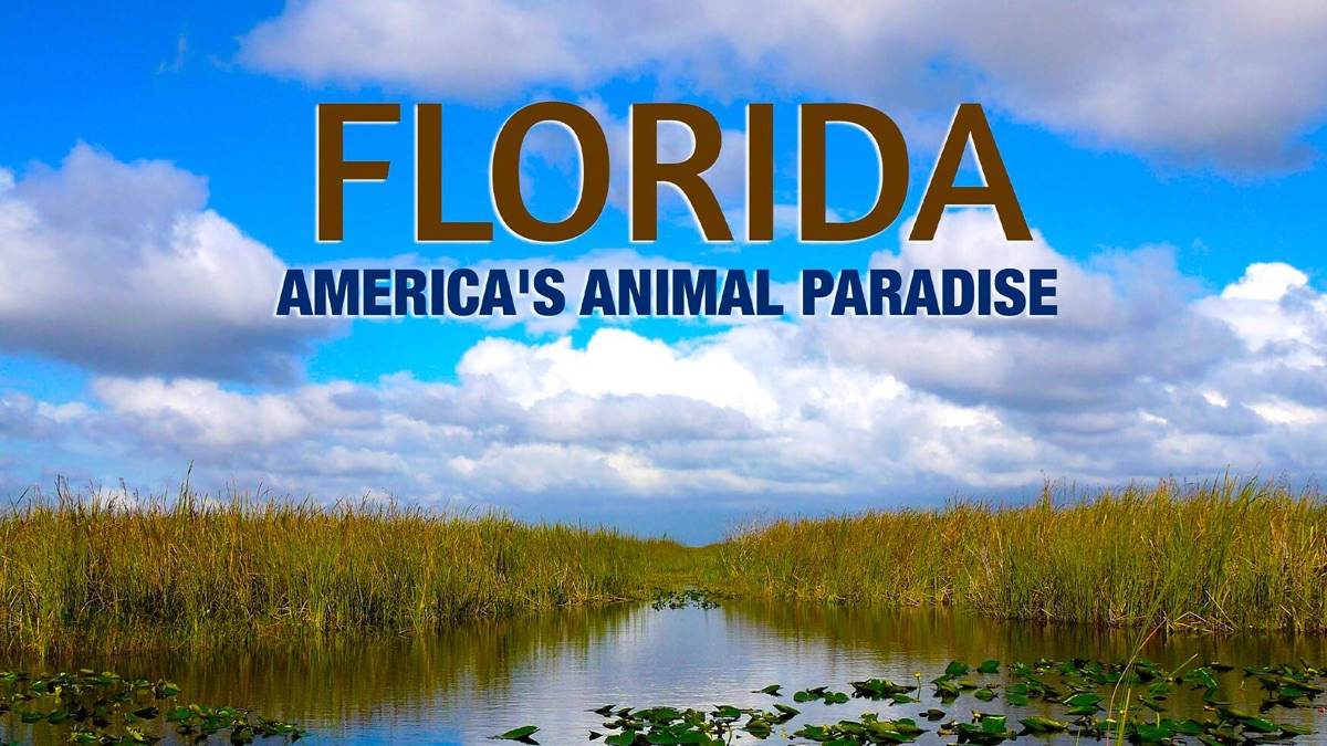 فلوریدا: بهشت حیوانات آمریکا (مستند)
