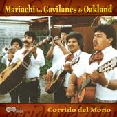 Mariachi Los Gavilanes De Oakland - No Compro Amores ( I Don't Buy Love)