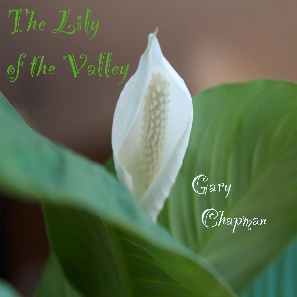 The Lily of the Valley - Single