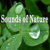 Pure Nature - Bubbling Brooks, Oceans, Rain, Rivers, and Waterfalls - Sounds of Nature