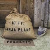 10ft Ganga Plant - Chalwa