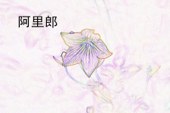 道拉基 (Balloon Flower)
