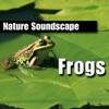 Frogs Nature Sounds Only