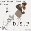 Jack Russel Terrier Single