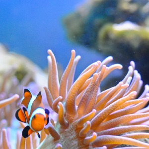 Marine Ecology HD