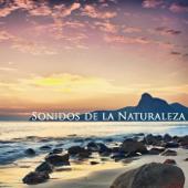Sonidos de la Naturaleza - Relajación, Meditación & Dulces Sueños, Musicoterapia Natural y Música Relajante