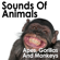 Red Howler Monkeys In the Jungle 4 - Pro Sound Effects Library