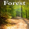 Forest Sounds of Nature