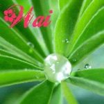 Kim Sueoka - Ka Wai 'Apo Lani (feat. Lau Hawaiian Collective)