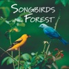 Songbirds of the Forest