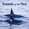 Pacific Ocean (Maui) - John Grout