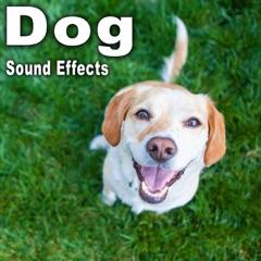 Dog Sound Effects