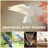 Bird Sounds - The Backyard grafismos