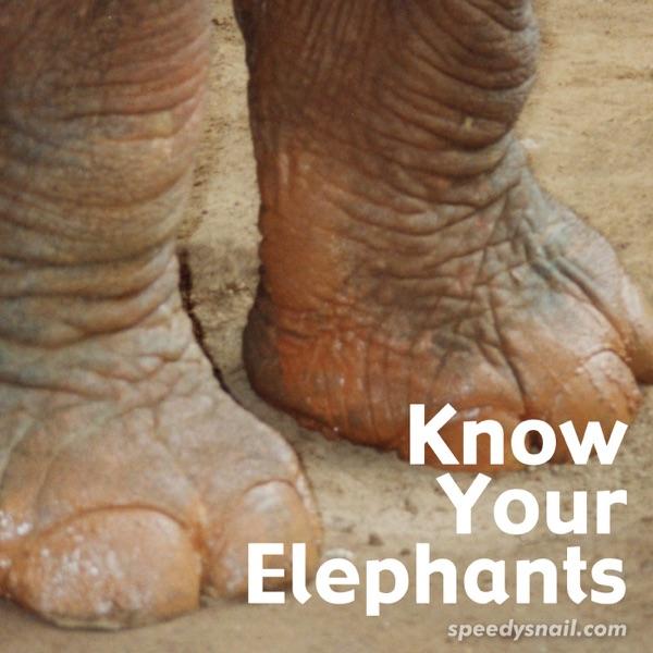 Know Your Elephants