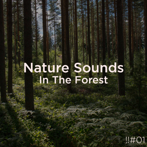 Nature Sounds Nature Music & Nature Sounds - !!#01 Nature Sounds in the Forest