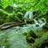 Tonal Zen Peaceful Nature - Tonal Zen