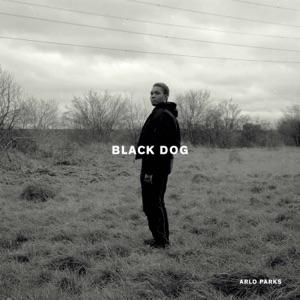 Black Dog - Single