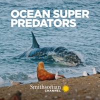 Télécharger Ocean Super Predators Episode 1