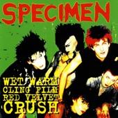 Specimen - Lovers