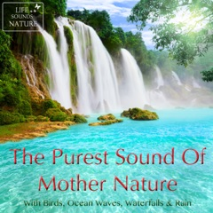 Wake Me Up In the Morning With This Fantastic Bird Chorus For Relaxation and Massage