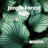 Jungle Forest Rain