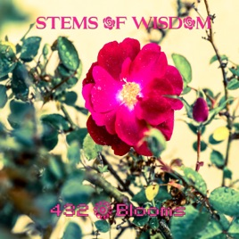‎432 Blooms - Single by Stems of Wisdom
