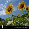 In August, she smiles on the farther side. - Single ジャケット写真