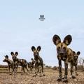 Belgium Top 10 Alternative Songs - Wrong Vibration - Balthazar