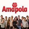 Amapola - Quiero ser tu amor