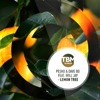 Lemon Tree by Pesho & Dave Bo iTunes Track 1