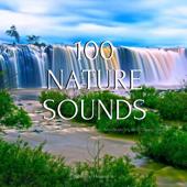 Birds Chirping - Nature Healers