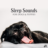 Sleep Sounds for Dogs & Puppies: Soothing Music to Help Your Puppy Go to Sleep at Night, Relaxation Bedtime Songs & Calm Sleep Lullabies for Dogs