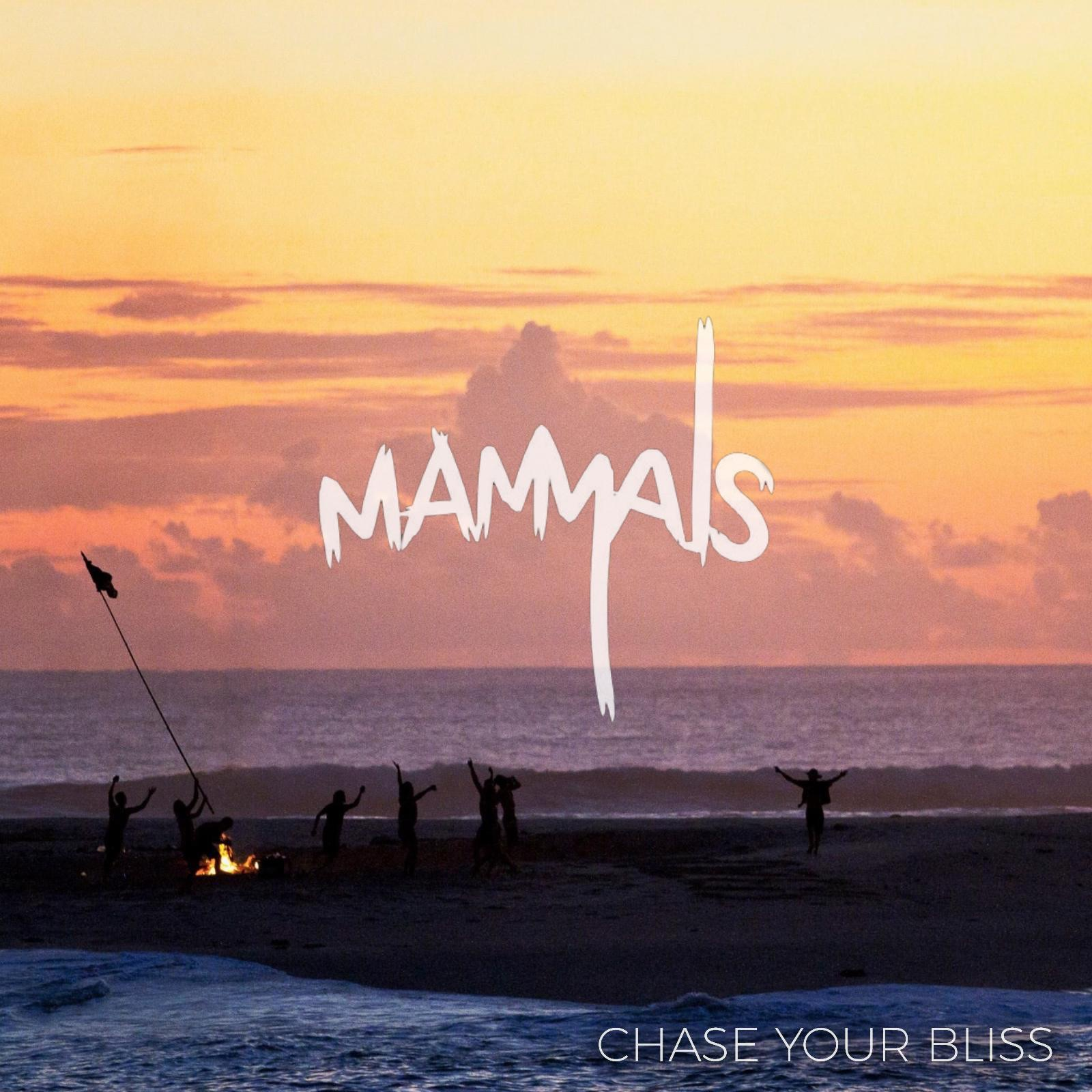 Chase Your Bliss - Single