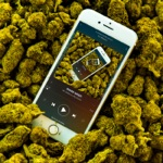 Mr. Williamz - More Weed (feat. Big Zeeks)