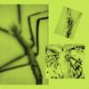 The Marx Trukker - Loanne Major Slides artwork