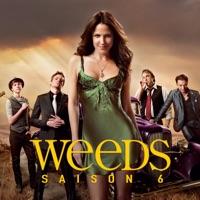 Télécharger Weeds, Saison 6 (VOST) Episode 9