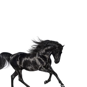 Old Town Road - Single Mp3 Download