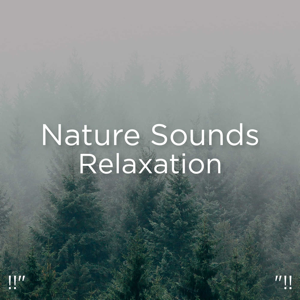 "Nature Sounds Nature Music & Nature Sounds - !!"" Nature Sounds Relaxation ""!!"