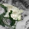 Flower by Ryohu