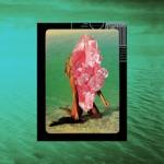 songs like Tick Tock (feat. 24kGoldn) [Sam Feldt Remix]