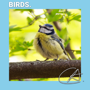 Loopable Ambience, Nature Ambience & Bird Sounds - Bird Sounds to Help You Relax