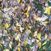 The Ants - Autumn (Slight Return)
