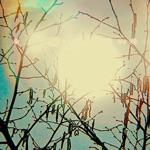Golden Sun - Single