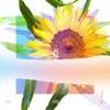[Re:flower] PROJECT #4 - Single ジャケット写真