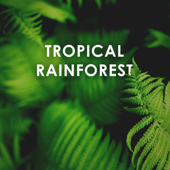 Tropical Rainforest: Calm Down and Relax Sounds