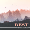 Best Birds Sounds: Birdsong, Nature Sounds, Calm Music, Exotic Ambience, Nice Time with Nature, Deep Sleep, Serenity, New Age - Various Artists