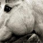 Bonny Light Horseman - Blackwaterside (feat. Eric D. Johnson, Josh Kaufman, & Anais Mitchell)